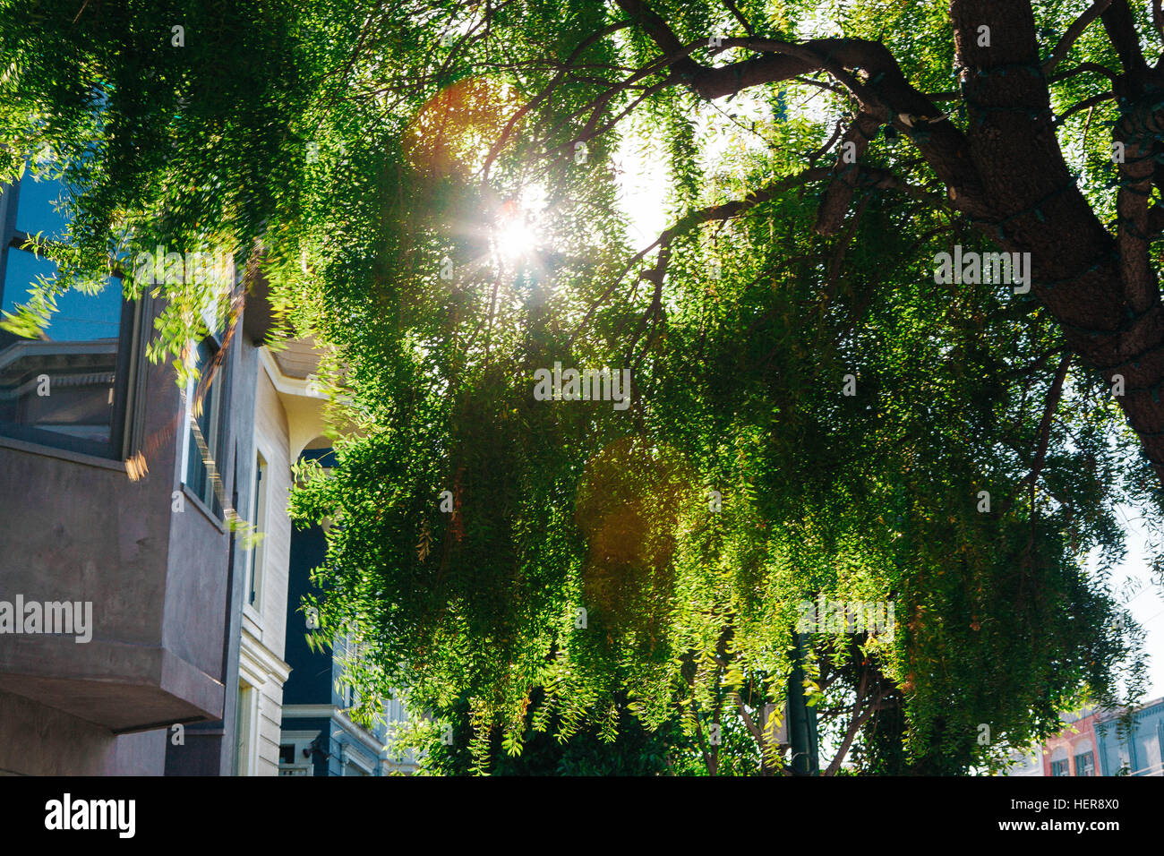 The sun shines through trees, house facades, - Stock Image