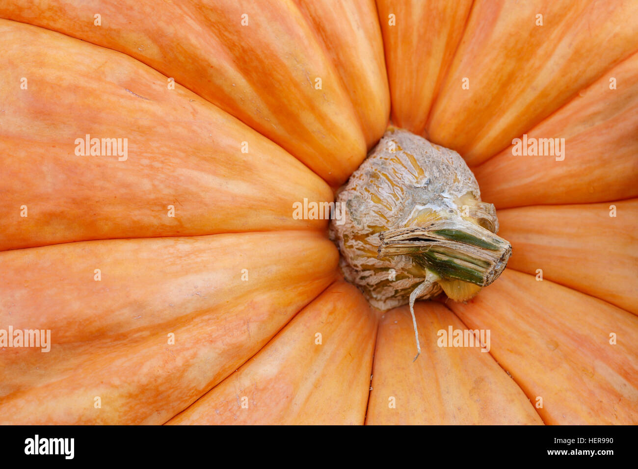 Kürbis, orange, Herbst, Struktur, close-up, Detail - Stock Image