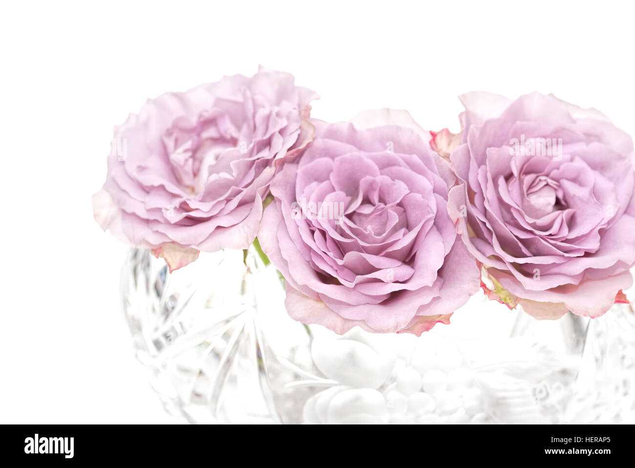 3 pink roses in crystal bowl, Horizontally, white background - Stock Image
