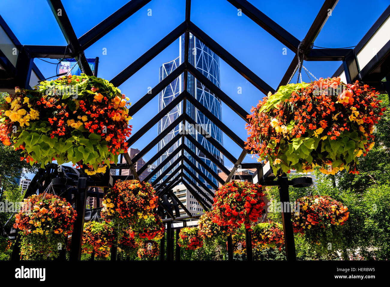 Kanada, Alberta, Bow River Valley, Calgary, Downtown, Olympic Plaza gegen Bow Tower, Arkade - Stock Image