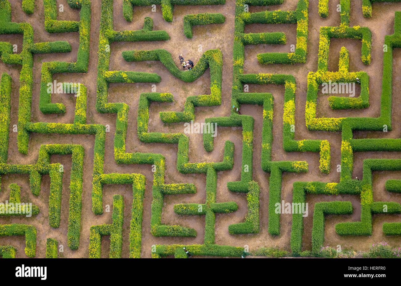 Aerial view, hedge maze, labyrinth, Bollewick, Mecklenburg-Western Pomerania, Germany Stock Photo