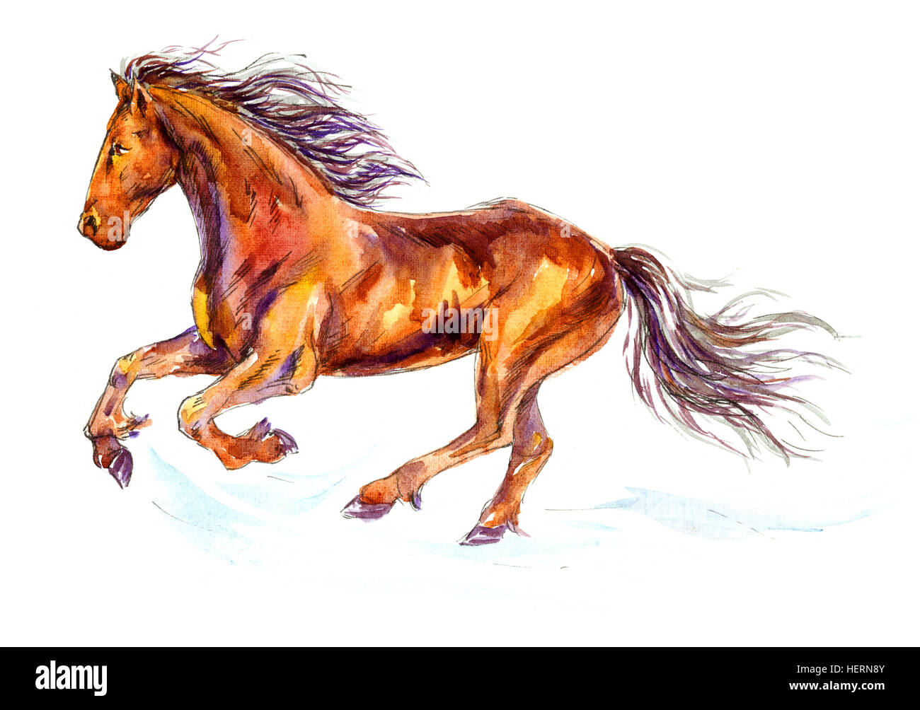 Fast Galloping Horse - Stock Image
