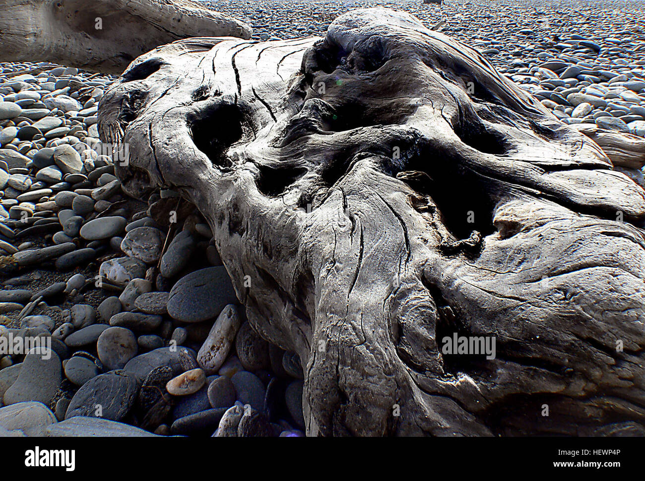 Driftwood is wood that has been washed onto a shore or beach of a sea, lake, or river by the action of winds, tides - Stock Image