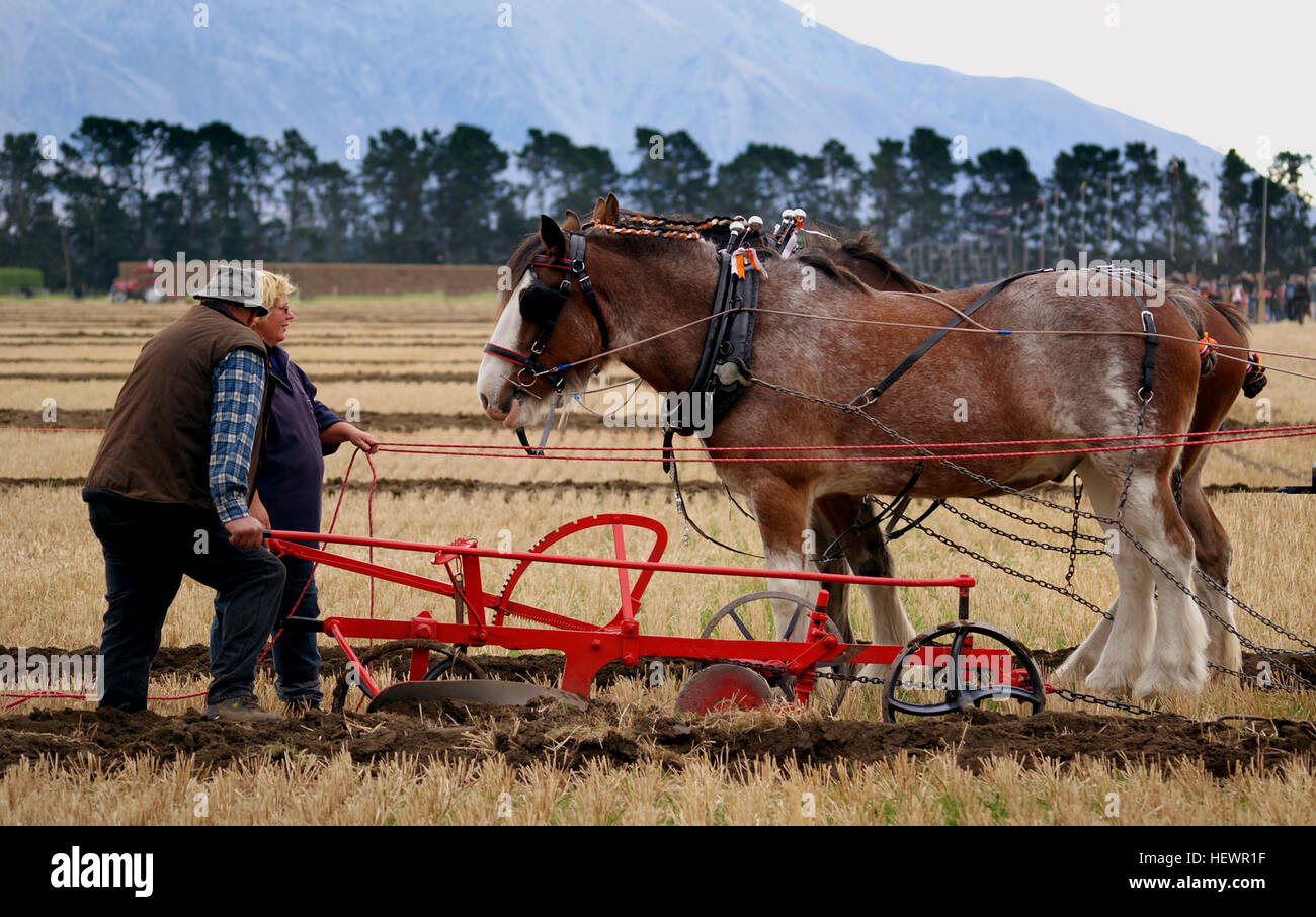 A ploughing match is a contest between men who each plough part of a field. Nowadays there are usually classes for Stock Photo