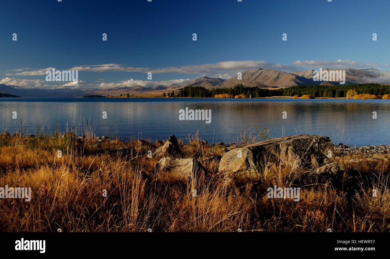 ication (,),NewZealand Fall Golden,Tekapo,Yellow,fourseasons,lake - Stock Image