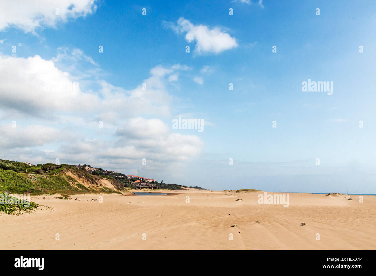 Indigenous plant growing in the beach sand on dune on beach landscape Stock Photo