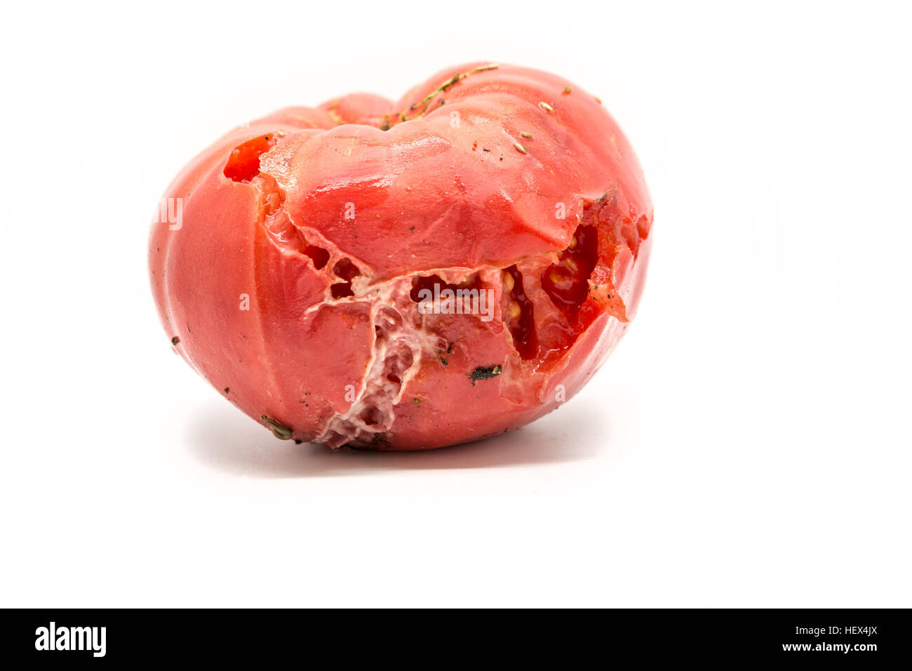 Single rotten tomato isolated on white stock photo 129652178 alamy single rotten tomato isolated on white ccuart Gallery