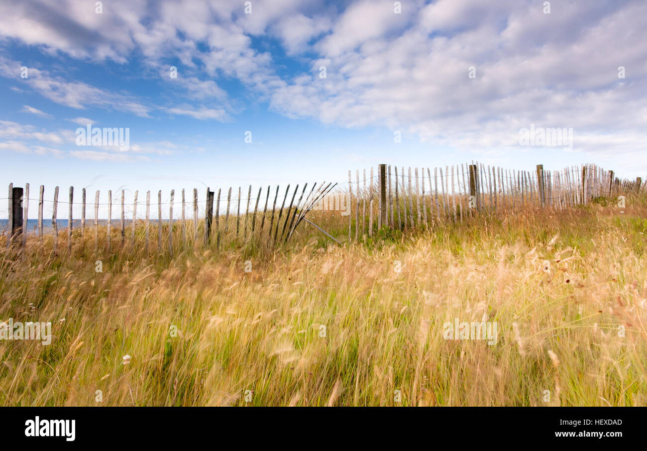 Rickety old wooden fence and summer grasses under a blue sky with fluffy clouds by the seaside at Whitley Bay, England - Stock Image
