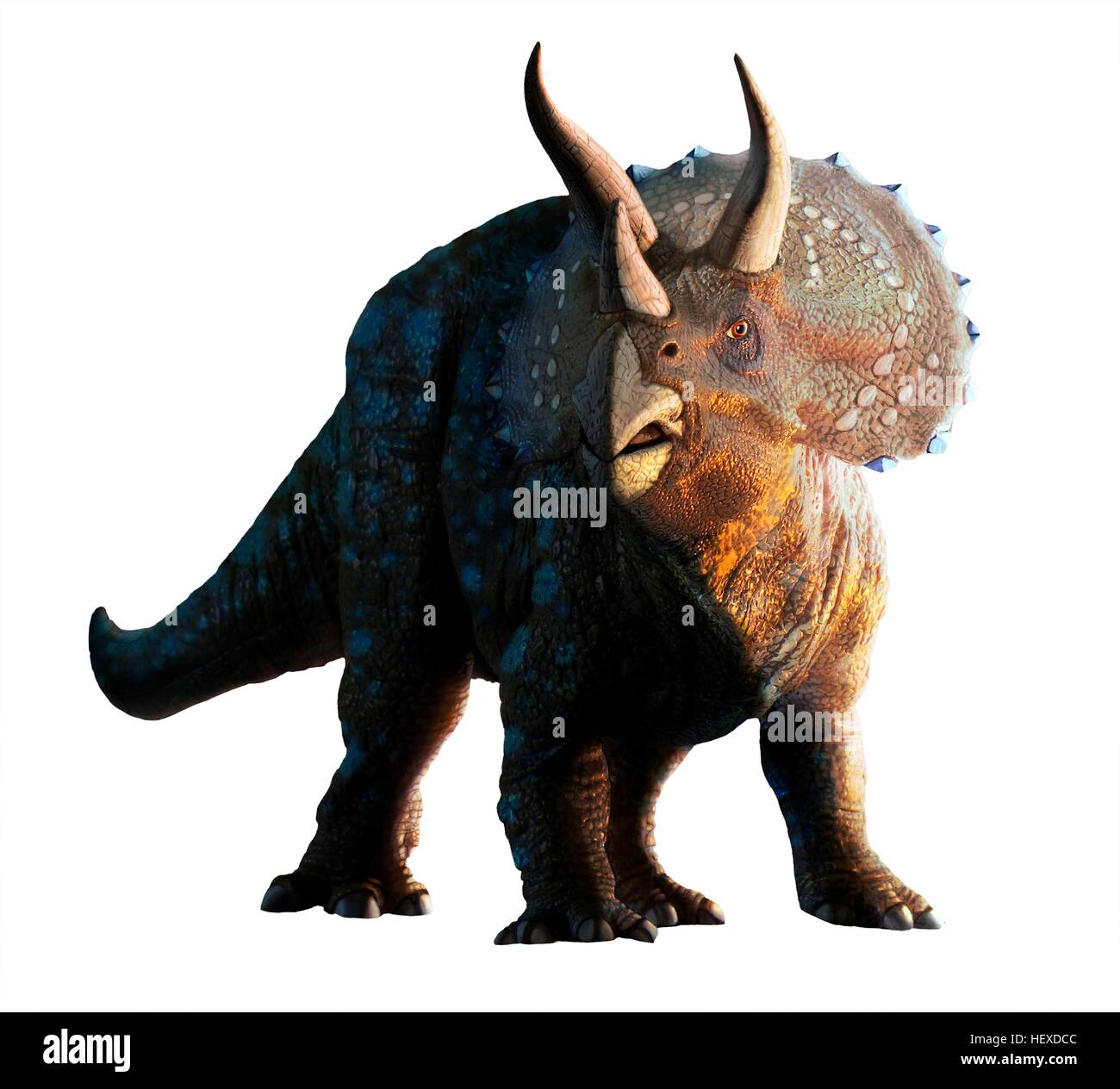 Artwork of a triceratops horridus dinosaur. These animals were common in the late Cretaceous period, from around - Stock Image