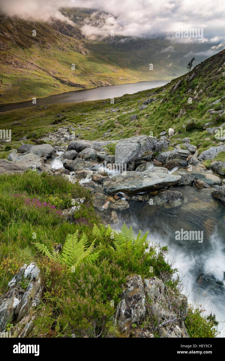 A waterfall along Nant Bochlwyd flows from Llyn Bochlwyd leading into Llyn Ogwen, Snowdonia. Stock Photo