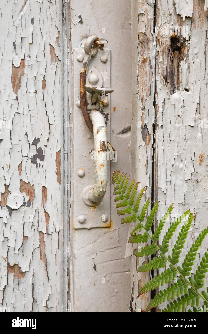 The paint is peeling from and old door. A fern grows over the handle. Stock Photo