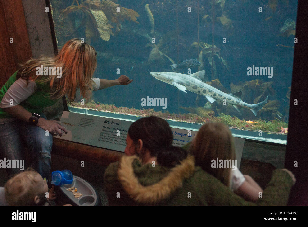 At Monterey Bay Aquarium,California,U.S.A.,United States of America, - Stock Image