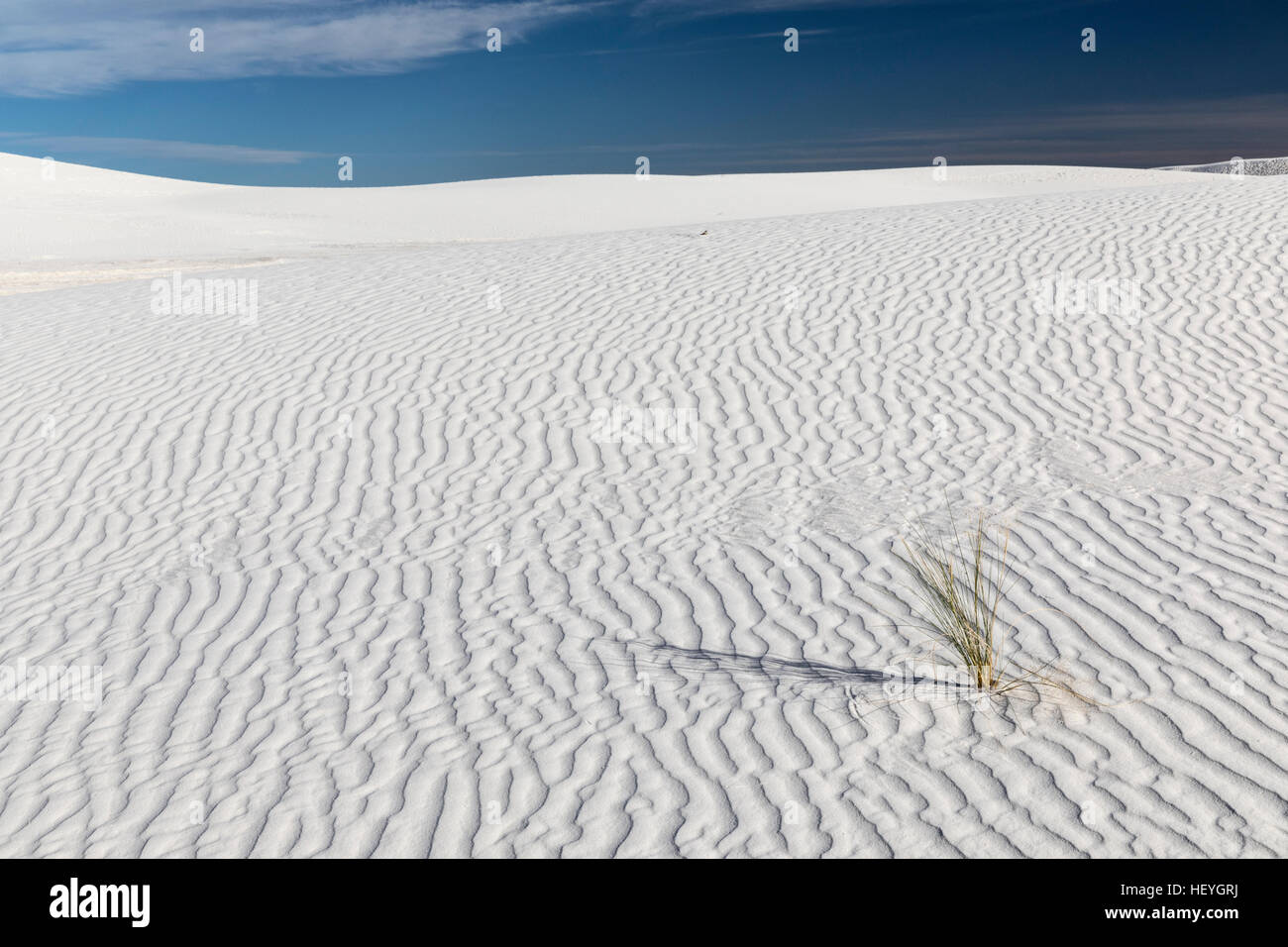 White gypsum sand dune and lone grass plant at White Sands National Monument near Alamogordo, New Mexico, USA - Stock Image