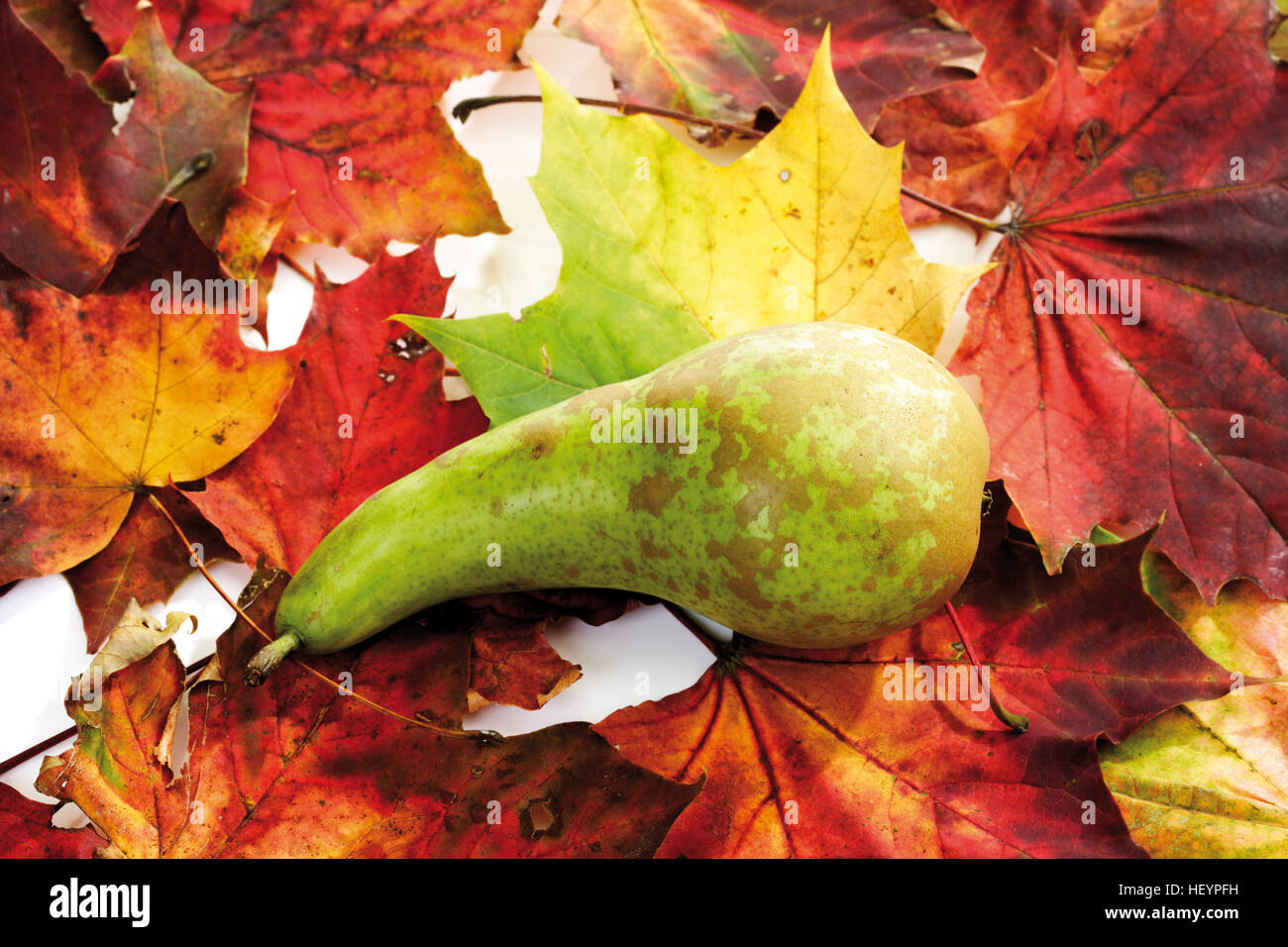 Pear with colourful autumn leaves Stock Photo