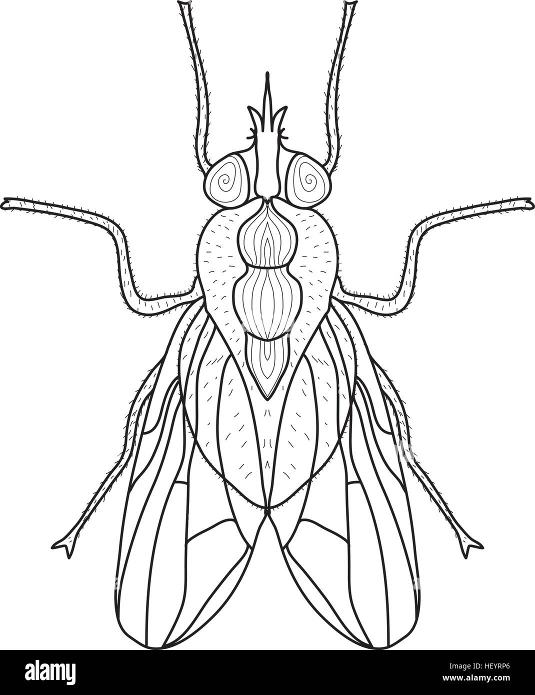 Line Art Vector Illustrator : Fly insect sketch doodle style line art vector