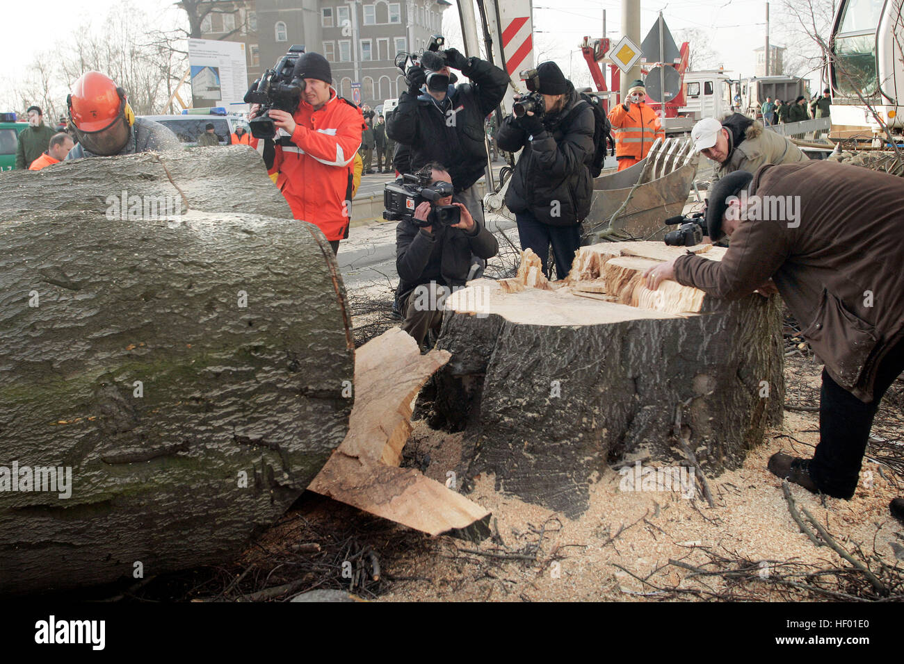 Robin Wood environmental activists were removed from a 300-year-old tree that was chopped down in order to build new bridge Stock Photo