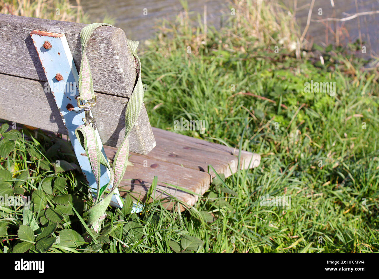 Dog collar left behind on bench with grasses growing wildly beneath it. - Stock Image