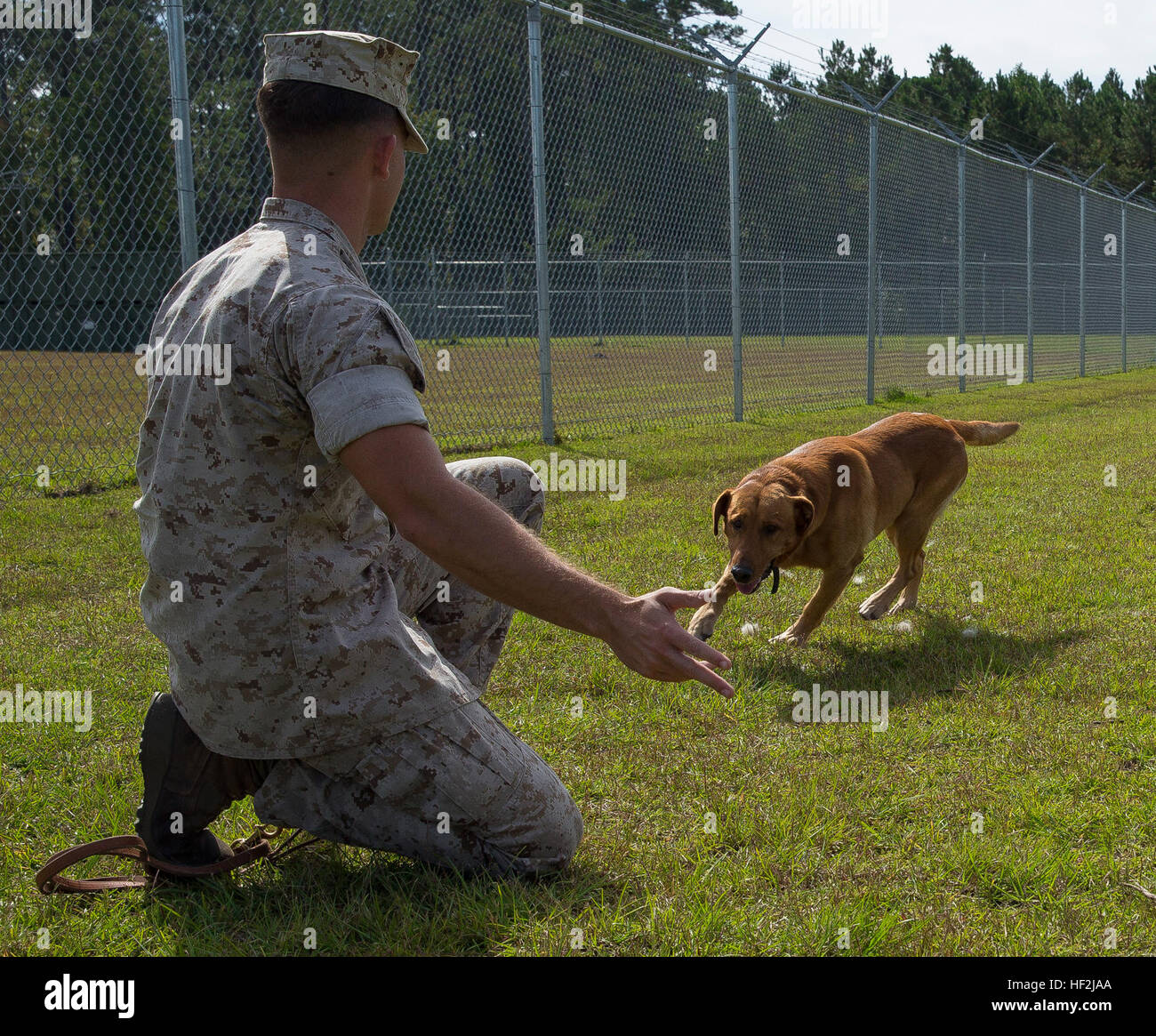 Sgt. Kent Ferrell, a specialized search dog handler with Military Working Dog Platoon, 2nd Law Enforcement Battalion, - Stock Image
