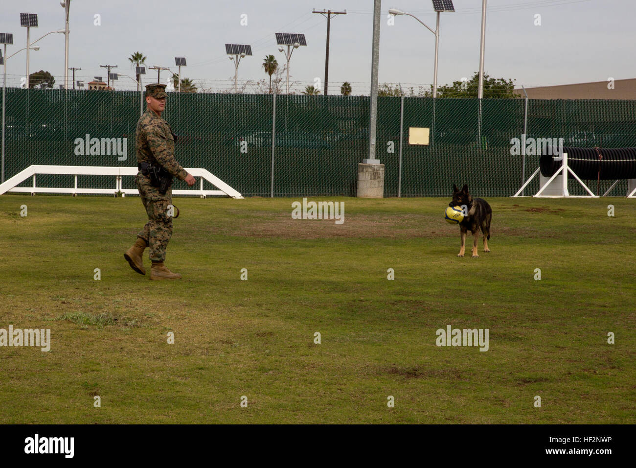 how to become a dog handler in the military