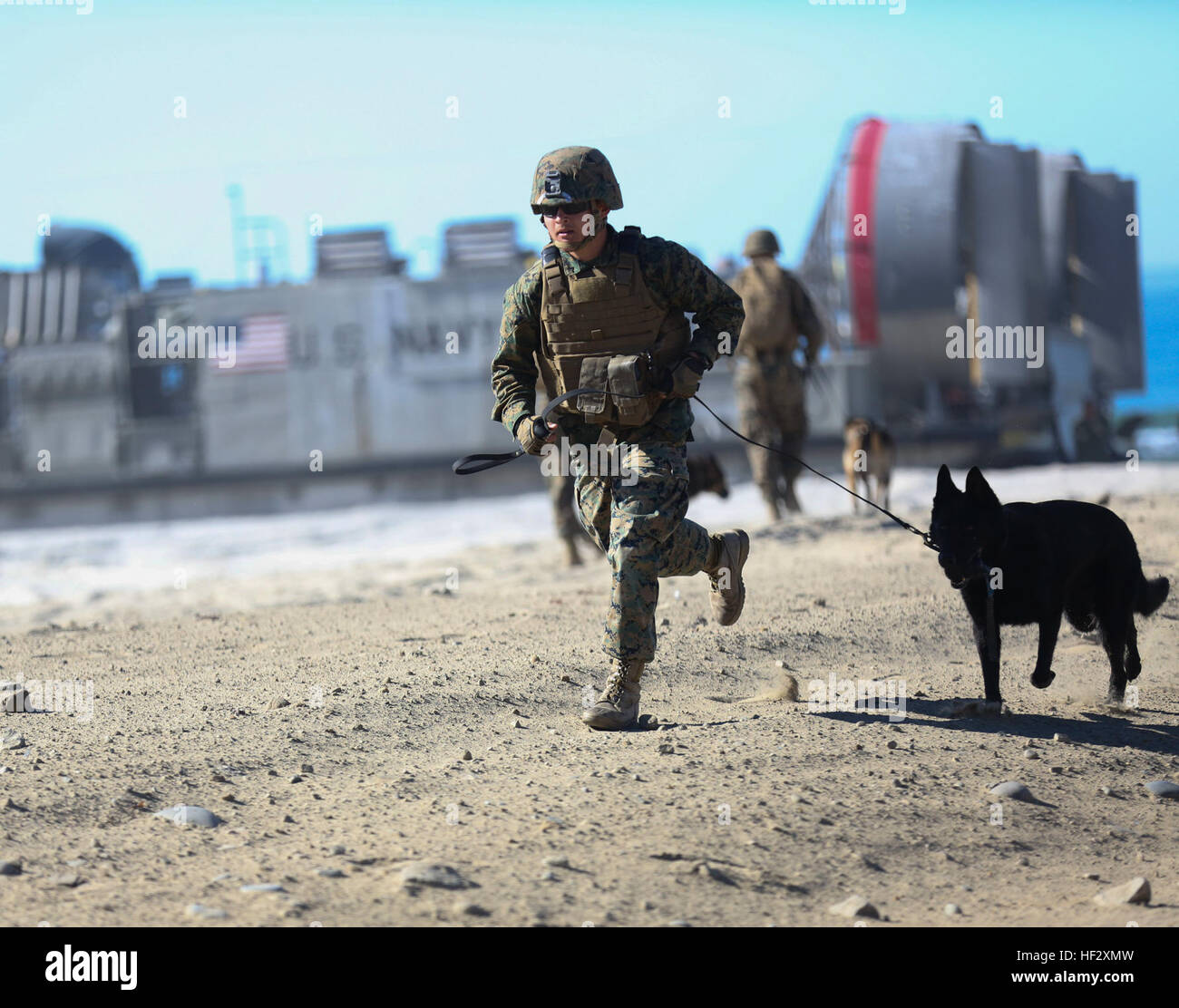 Marines with 1st Law Enforcement Battalion hit the beach with their working dogs during recent training aboard Camp Stock Photo