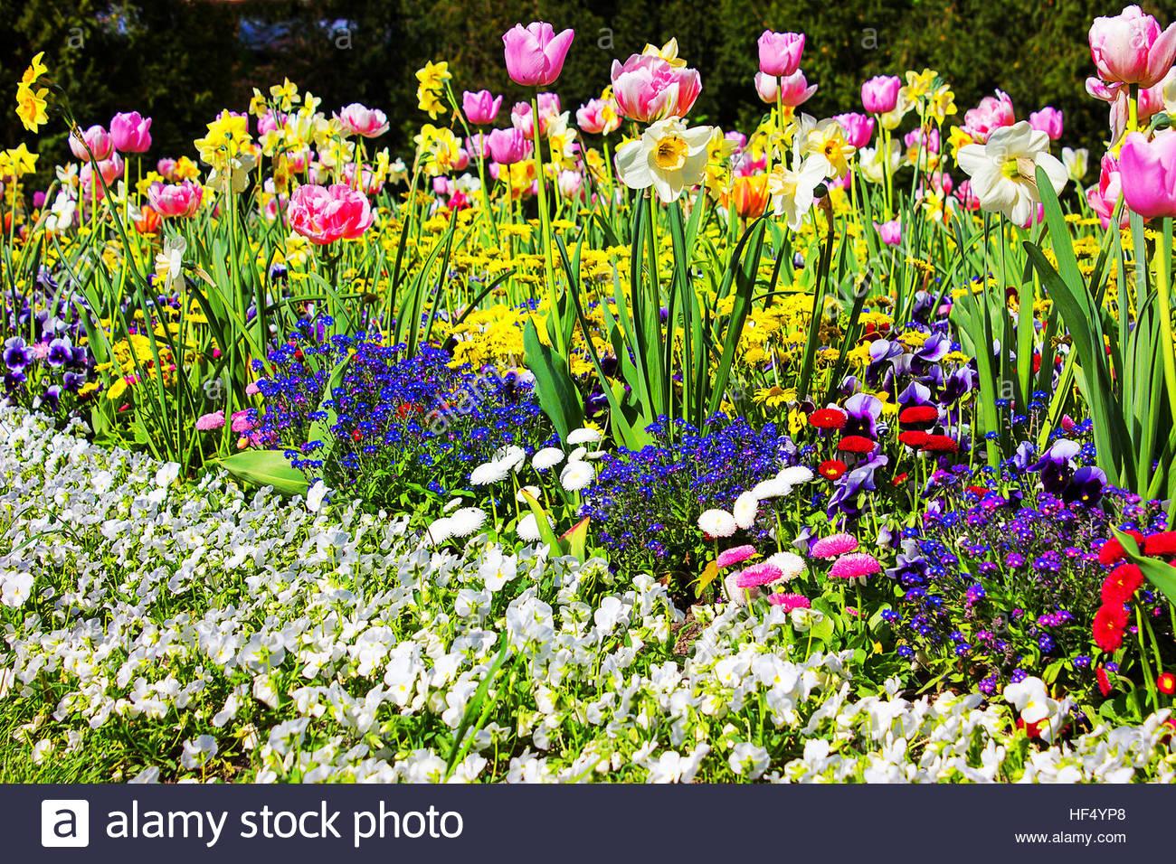 Charmant Summer Garden Flowerbed Summer Flowerbeds Colourful Garden ...