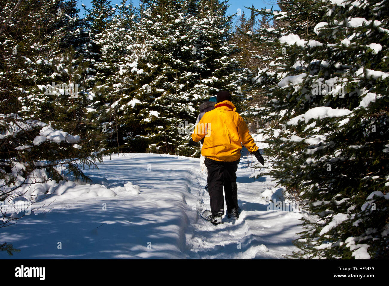 The Appalachian Mountain Club Highland Center at Crawford Notch, New Hampshire, USA, snow shoeing a mountain path - Stock Image