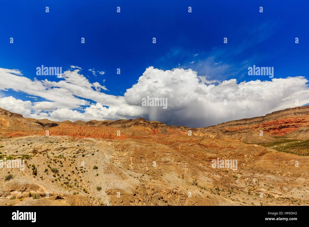 Joshua Tree Road, Mojave Desert (Scenic Backway) - Stock Image