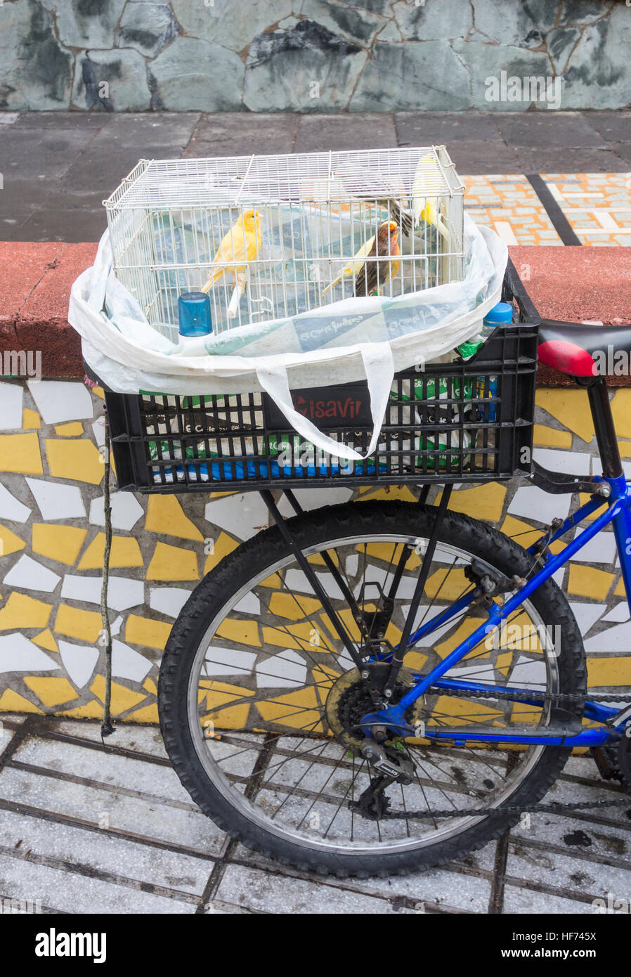 Canary seller with birds in cage on back of bike outside city indoor market in Las Palmas, Gran Canaria, Canary - Stock Image