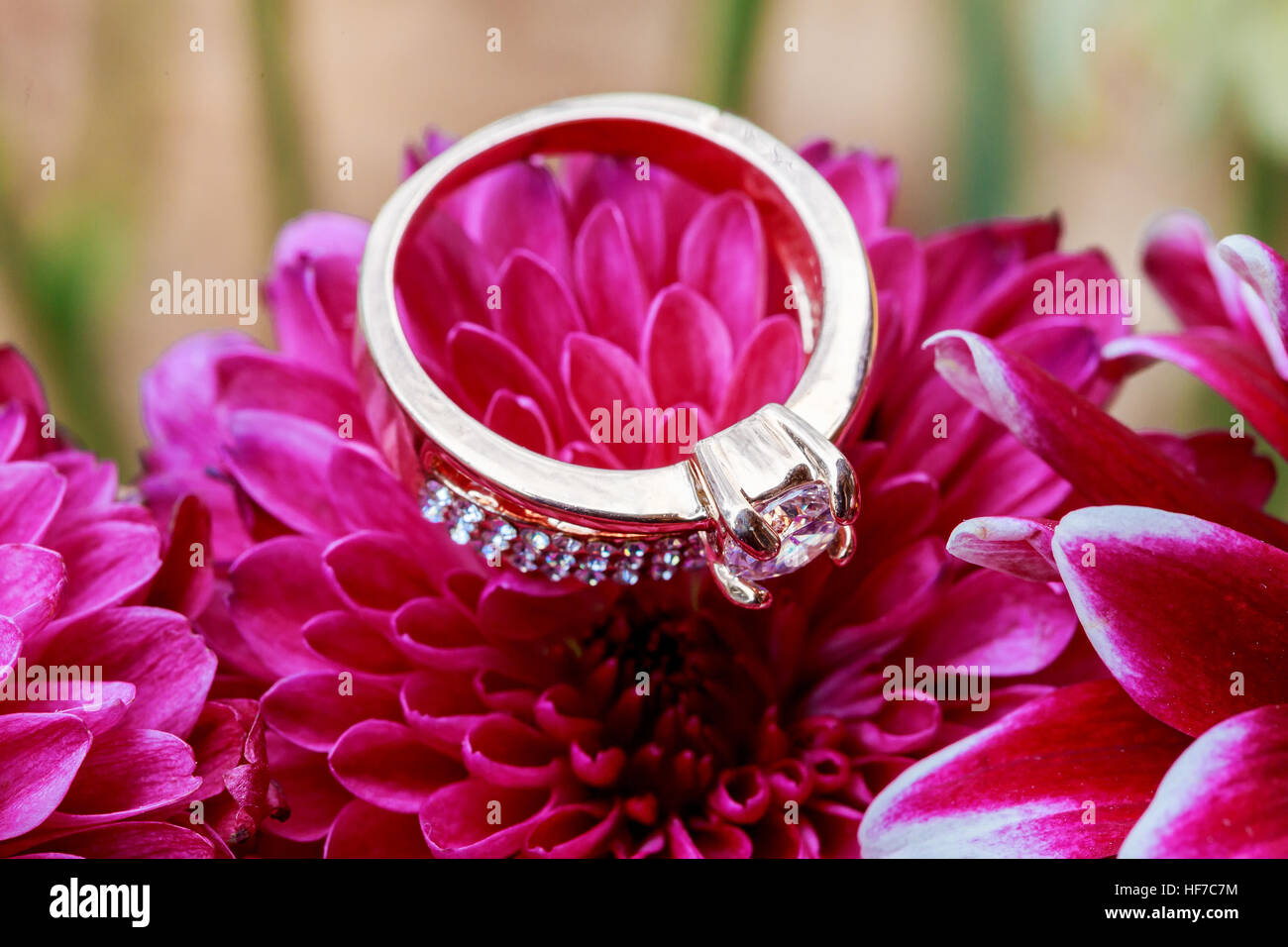 ring Valentines day love flowers Diamond ring inside red taken closeup - Stock Image