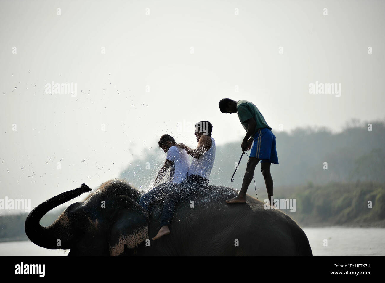 Kathmandu, Nepal. 27th Dec, 2016. Nepalese people enjoying elephant shower at Sauhara, Chitwan, Nepal on Tuesday, - Stock Image