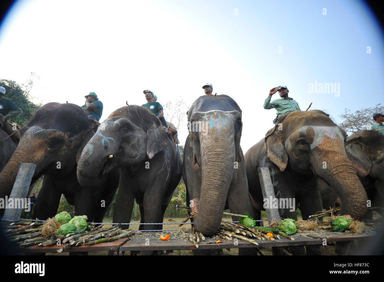 kathmandu nepal 27th dec 2016 elephants enjoying various types