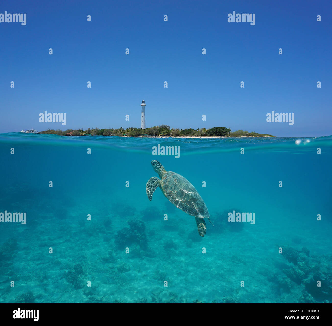 A green sea turtle underwater with Amedee island and lighthouse over the water split by waterline, New Caledonia, - Stock Image