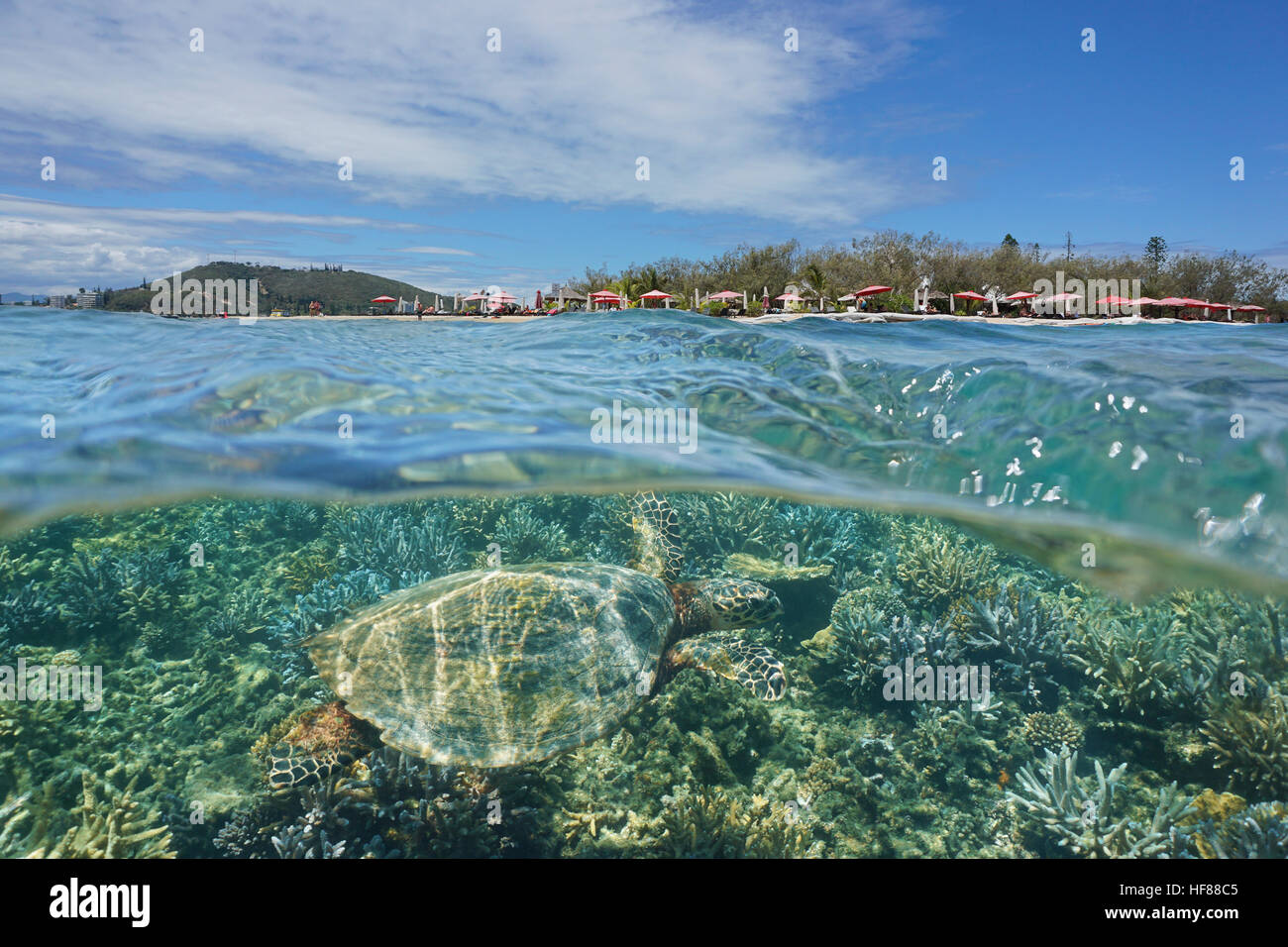 A hawksbill sea turtle underwater and islet Canard over the water split by waterline, New Caledonia, Noumea, south - Stock Image