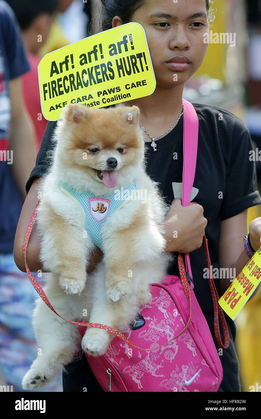 Quezon City, Philippines. 28th Dec, 2016. A dog owner carries her pet dog during an event against firecrackers in - Stock Image