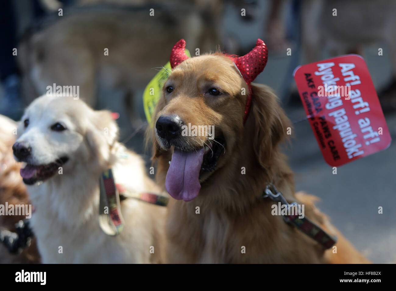 Quezon City. 28th Dec, 2016. Photo taken on Dec. 28, 2016 shows a dog with a placard on its leash during an event - Stock Image