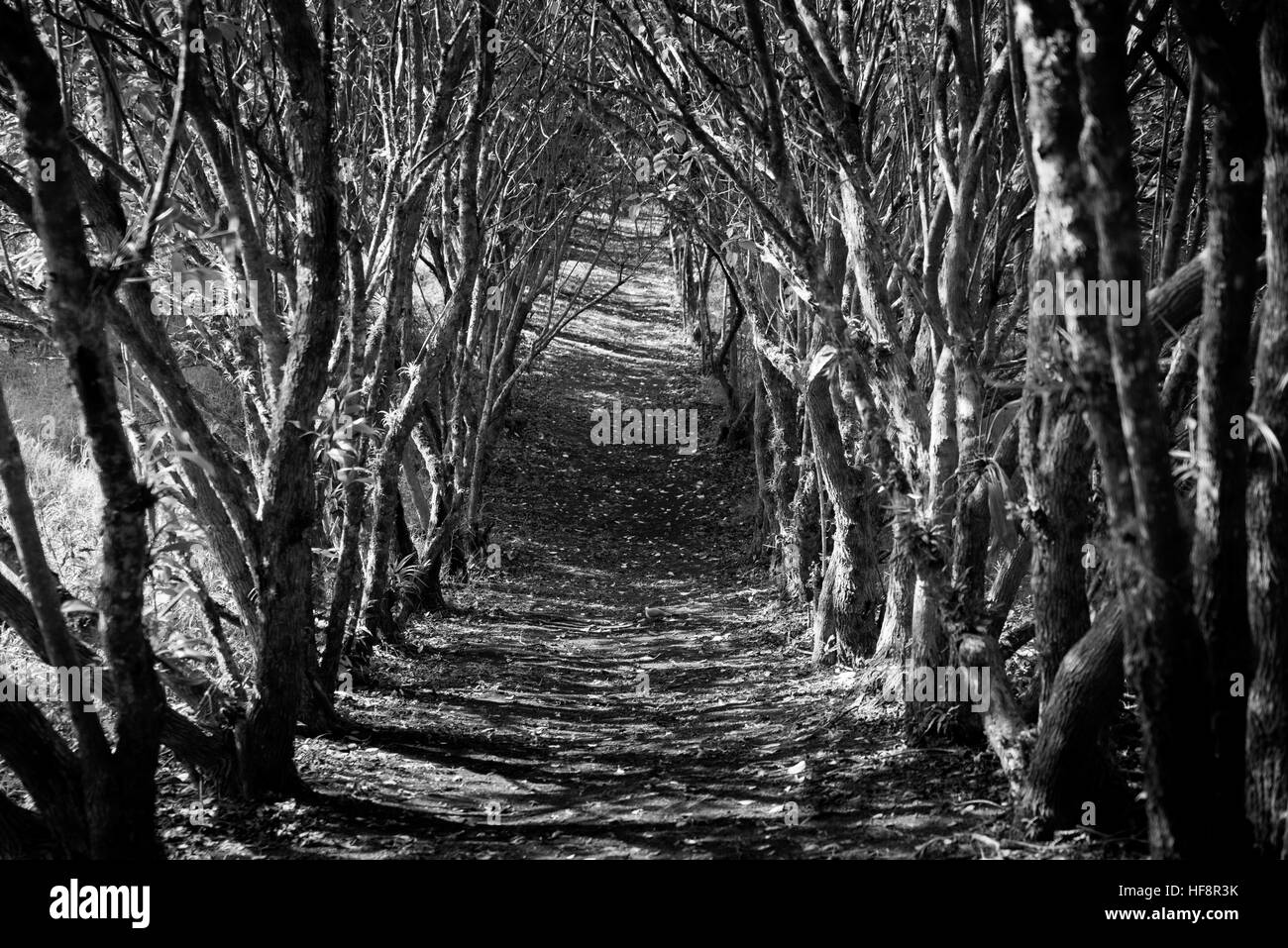 Black and white arched jungle trail stock image