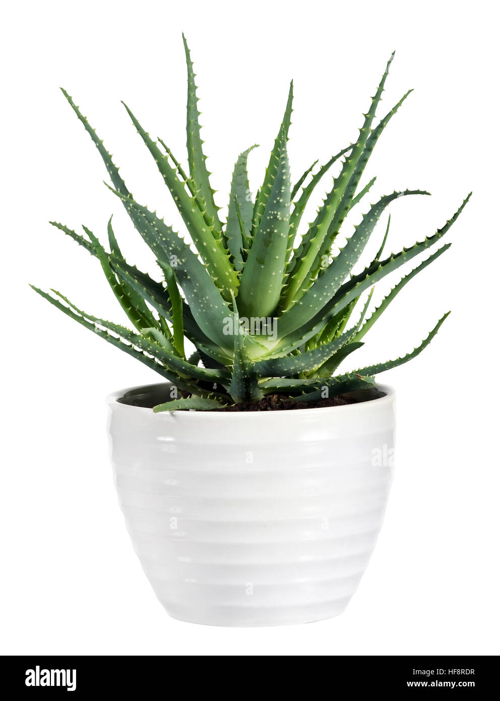 aloe vera plant cut out stock images pictures alamy