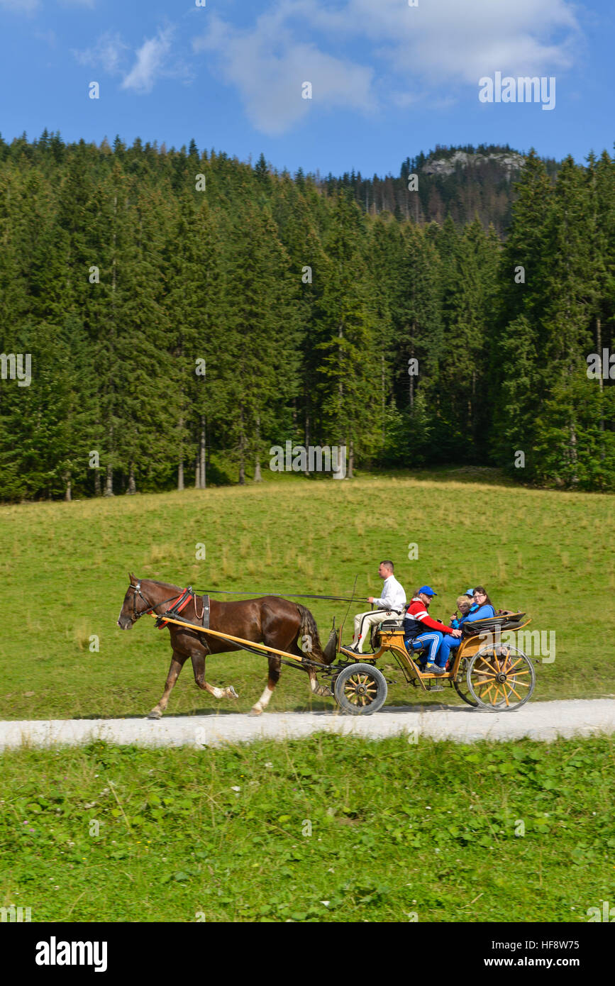 Pferdekutsche, Dolina Koscieliska, Hohe Tatra, Polen, Horse carriage, the high Tatra Mountains, Poles - Stock Image