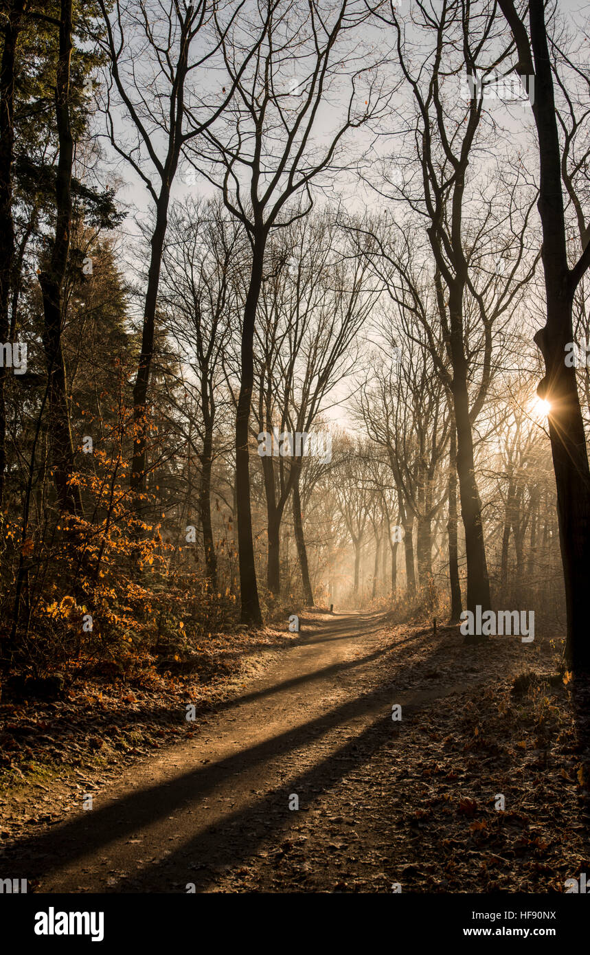 View of a forest in the winter with the sun casting long shadows Stock Photo