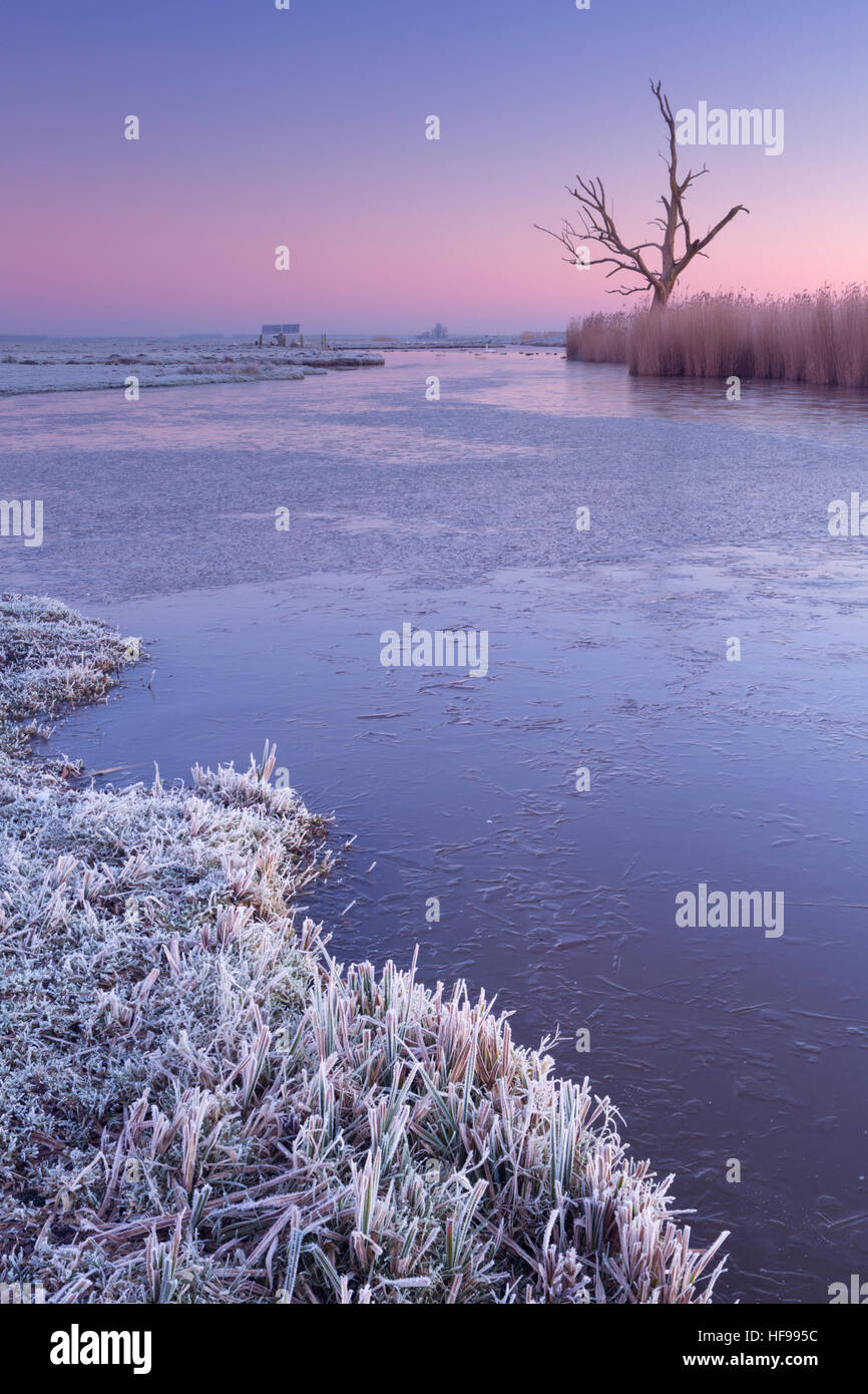 Winter in a Dutch polder landscape with a lonely tree at dawn. - Stock Image