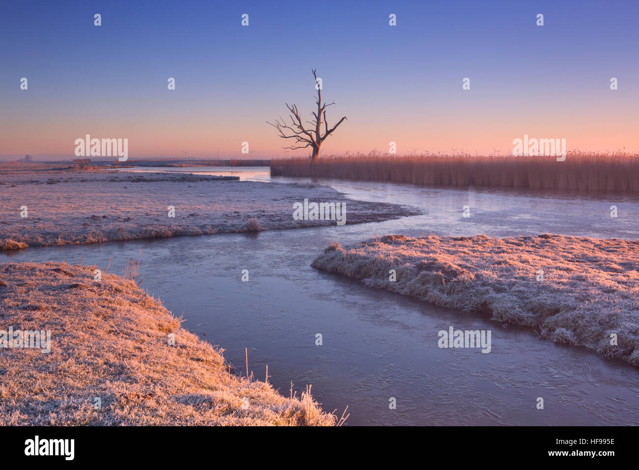 Winter in a Dutch polder landscape with a lonely tree at sunrise. - Stock Image