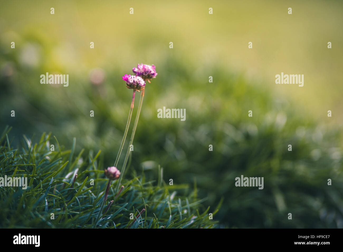 Tiny pink flowers stock photos tiny pink flowers stock images alamy tiny pink flowers in a garden stock image mightylinksfo Gallery