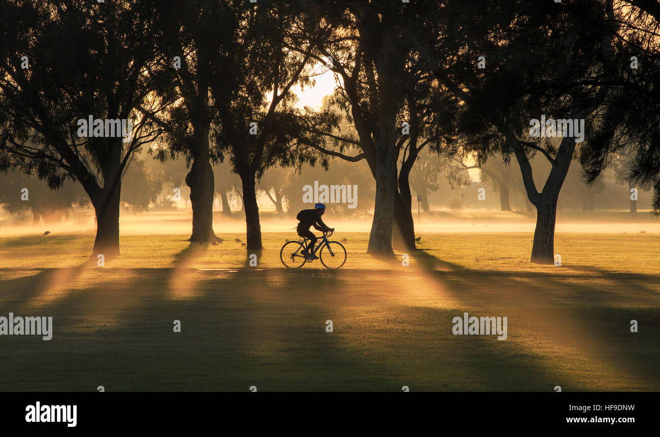 A female cyclist riding on a bike path through a park on a misty morning at sunrise. - Stock Image