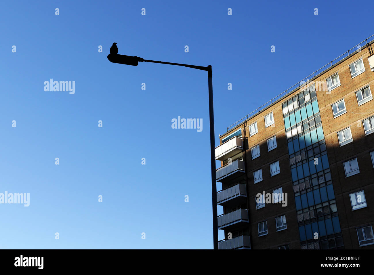 Seagull on lamp post - Stock Image
