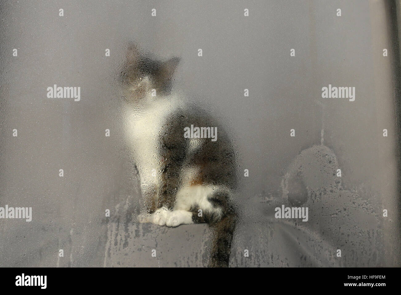 Cat sits in Window - Stock Image