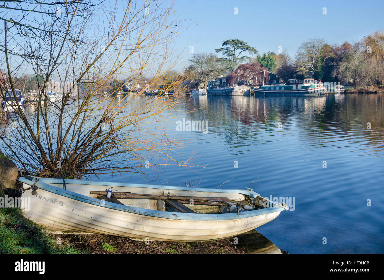 A rowing boat is chained up to a tree on the bank of The River Thames at Old Windsor in Berkshire, UK. - Stock Image