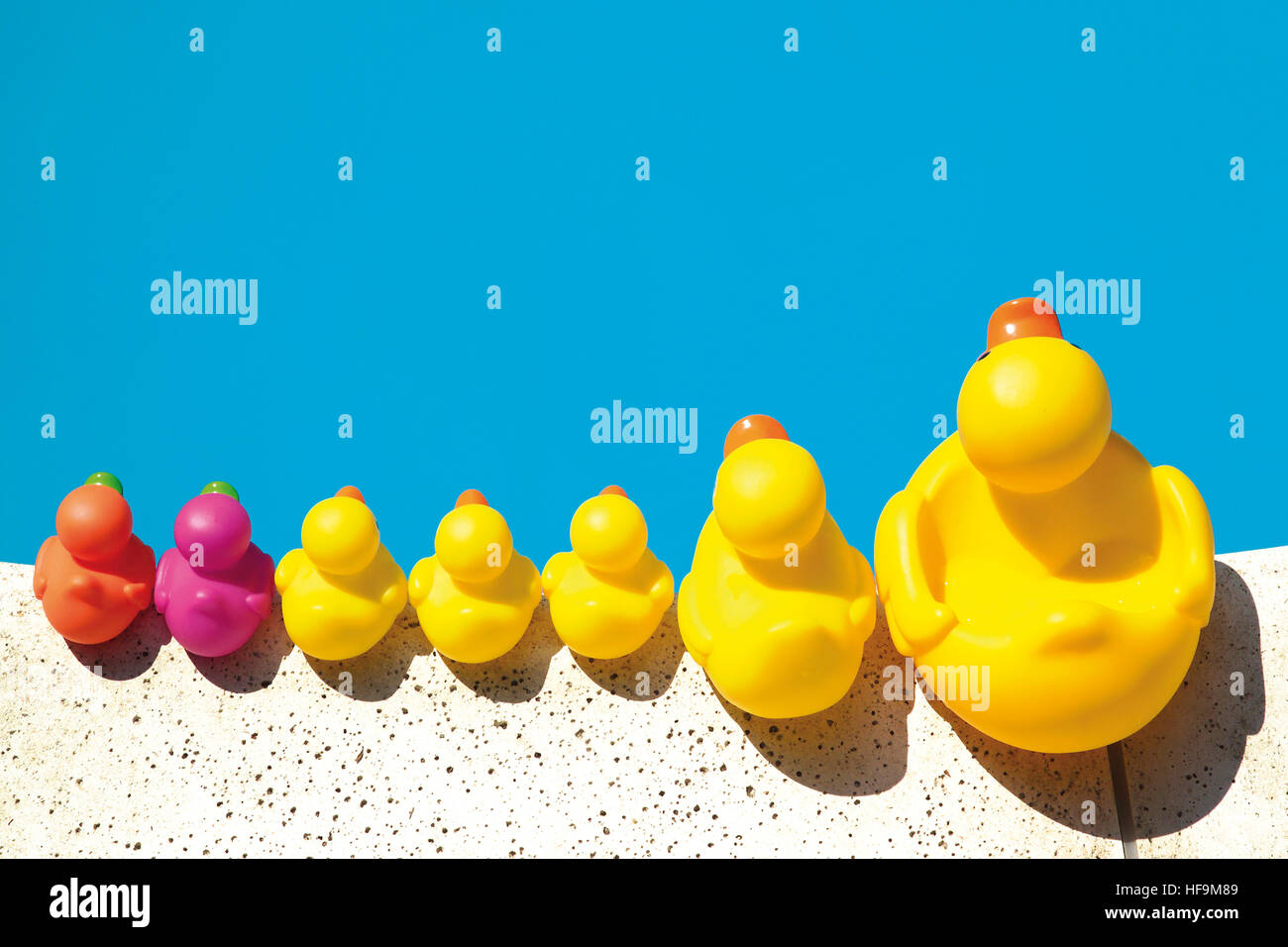Rubber duckies lined up along the edge of a swimming pool - Stock Image