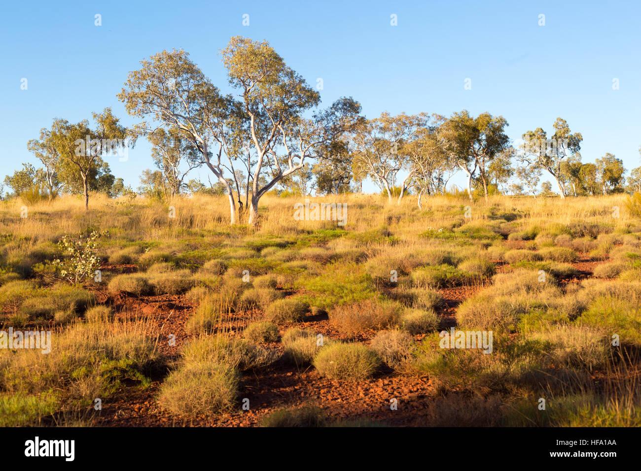 Australian Bush, landscape - Stock Image