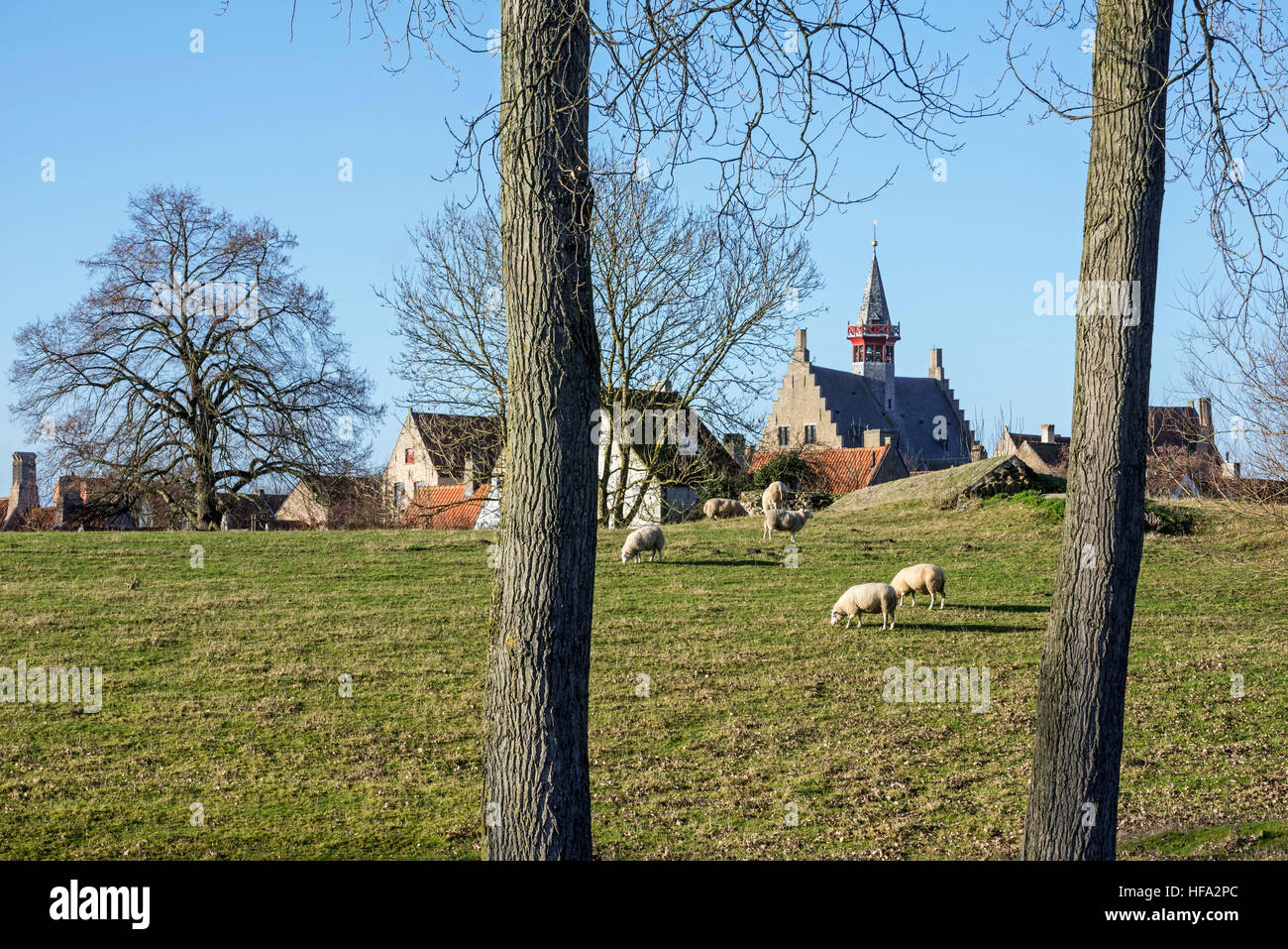 Sheep grazing in polder and the Damme town hall in winter, West Flanders, Belgium - Stock Image