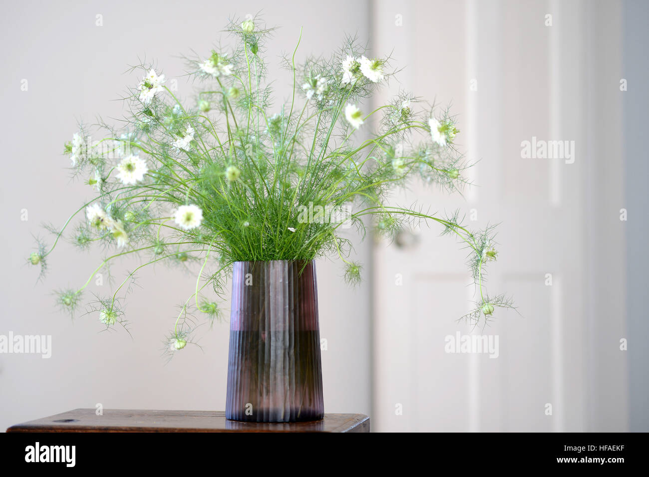 Smokey glass vase with love-in-a-mist nigella flower display inside - Stock Image